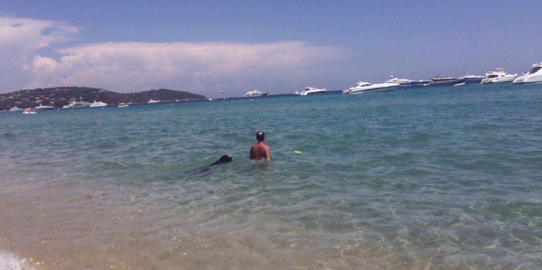 Königspudel schwimmt